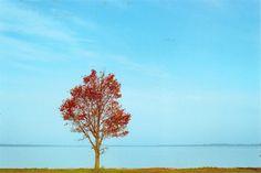 autumn, lomo