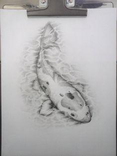 Carpa koi pez
