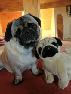 Pug and toy pug friends!