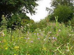 bloemrijk grasland -