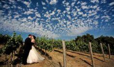 Holman Ranch and Vineyard - Wedding Venue - www.dailyaisle.com