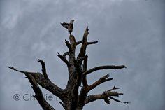 http://www.thrucharlieseyes.com/blog/2014/11/natures-handiwork