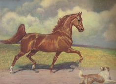 American Saddlebred stallion Bourbon Chief was the subject of this George Ford Morris painting.