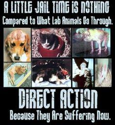 animal petition sites | Animal testing IS animal abuse!