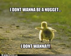 Funny Animal Captions - Run Free