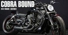 2012 VRSCDX CUSTOM : COBRA BOUND | BAD LAND