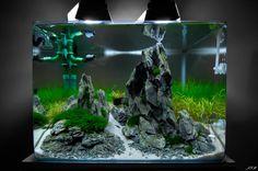 Cocoon N°7 par Cryptal912. #aquascaping #aquarium #fishtank