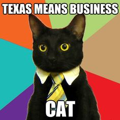 Texas Means Business Cat - #UT #McCombs hires Business Cat as nation's first ever feline-in-residence.