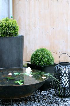 Drama of matching accessories, including a bird friendly water feature, against a pale background.