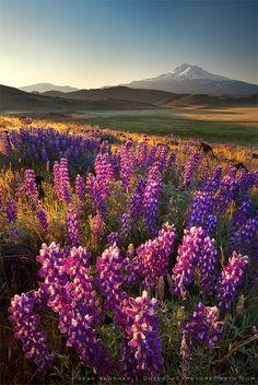 Shasta Valley, California
