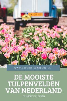 Benieuwd waar je de mooiste tulpenvelden van Nederland precies kan vinden? Hieronder vind je een uitgebreid overzicht dat zich zeker niet alleen beperkt tot de Bollenstreek.
