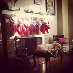 Puppy Christmas Dreams are the best dreams!
