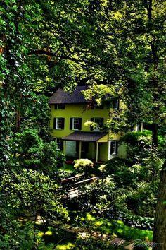Hidden forest house in Burlington, Vermont