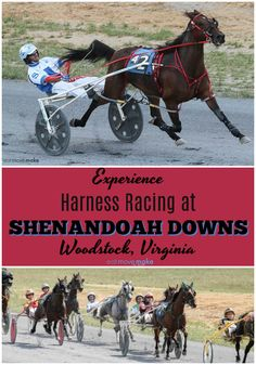 Off to the Races at Shenandoah Downs! Experience the fun and excitement of harness racing in Virginia. See the pacers and trotters in action on the track. Standardbred horses are amazing! USA