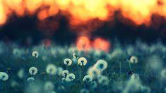 поляна цветов hd - Поиск в Google