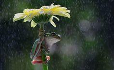 15 adorables photos d'animaux avec des parapluies naturels