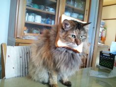 Marie from Japan, Breaded Cats