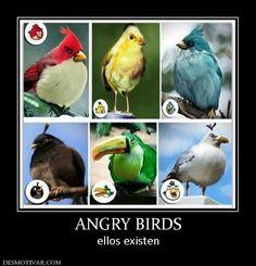ANGRY BIRDS ellos existen