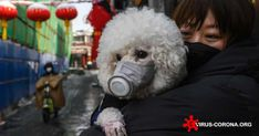 A dog in Hong Kong tested 'weakly' positive for the coronavirus that causes but may not have contracted it. What does this mean for pet owners? Hong Kong, Dog Test, Ghost City, Mortality Rate, Protective Mask, Bill Gates, Bad News, Dog Owners, Dog Cat