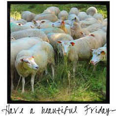Have a Beautiful Friday! Come visit A Warm Hello each day for a new photo to SHARE with friends and followers!