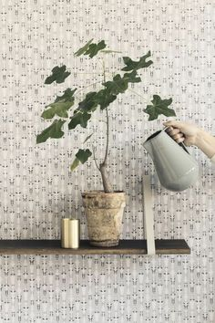 1000 bilder zu pflanzen garten balkon auf pinterest pflanzen pflanzenk bel und blumenampeln. Black Bedroom Furniture Sets. Home Design Ideas