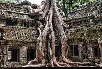 trees overgrown ancient temple - thailand