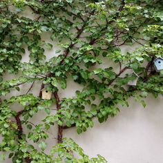 Das Grün freut sich aber sonst???  Guten Morgen! #WisteriasRoom #potsdam #berlin #shoplocal #british #light #living #accessory #decoration #interiordesign #scentedcandle #gifts #instahome #fashion #towel #pillow #design #creative #shabbyhomes #vintagestyle