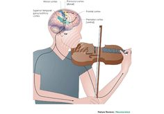 The Surprising Science Behind What Music Does To Our Brains   Fast Company   Business + Innovation