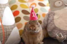 It's bunny's first birthday! - August 29, 2012