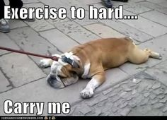 Funny Bulldog Memes Images & Pictures - Becuo
