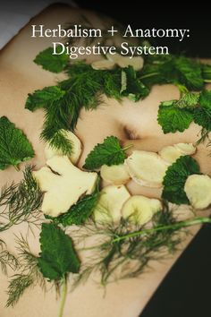 Healing starts with the gut. Learn more about the digestive system and the herbs that support it on our Plant Power Journal.