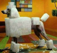 Cubist Canine Coifs : Poodle Haircuts lol odd but I must learn this cut!