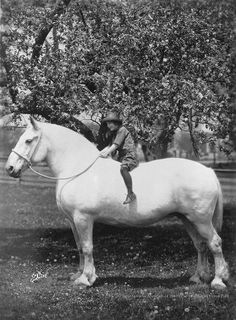 Girl on Drafter - draft horse - working horse