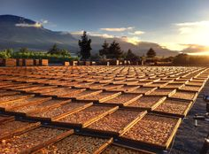 Sunrise over peaches drying on the drying yard on Koelfontein farm, outside Prince Alfred's Hamlet in the Ceres valley. (Photo A. My Land, Countries Of The World, Some Pictures, Peaches, Railroad Tracks, South Africa, Roots, The Outsiders, Sunrise