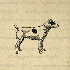 Fox Terrier Dog Image Graphic Printable Illustration Digital Download Antique Clip Art. Vintage printable digital graphic from antique artwork. This high resolution, high quality digital artwork can be used for transfers, printing, papercrafts, pillows, tote bags, and much more. Antique artwork. This graphic is high quality at 8½ x 11 inches large. A Transparent background png version is included.
