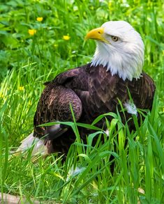 The Fraser Valley Bald Eagle Festival: Your Ultimate Guide Fraser River, Fraser Valley, Cozy Cafe, Free Park, Walking Tour, Historical Sites, Photo Contest, British Columbia, Eagles