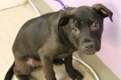 Jonah: At only 4 months old, this baby sits on death row at upstate SC shelter