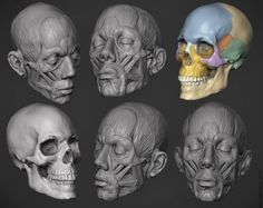 My Zbrush Artworks - Majid Esmaeili - Page 7 Facial Anatomy, Skull Anatomy, Head Anatomy, Anatomy Poses, Anatomy Study, Body Anatomy, Anatomy Art, Anatomy Reference, Art Reference