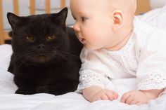 Elder Cat with Younger Baby ..