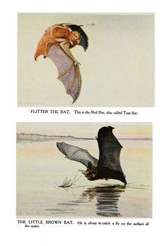 Bat illustrazione Vintage.