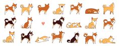 A lot of shibas by olliewhen
