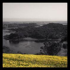 #towerhill #visitwarrnambool #explorewarrnambool #destinationwarrnambool #spring #springtime #crater #volcano #colorsplash by fatboydarky http://ift.tt/1LWgNOG