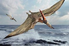 pterodactyl - my third grade teacher told us that her brother was fishing in some backwoods part of Texas with a friend and they believed they saw one. I'm sure they were mistaken, but that reminds me, I also want to see one. Let's get on that, OK?