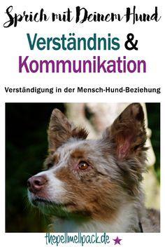 So kannst Du auf Augenhöhe mit Deinem Hund kommunizieren   Hund   Verständigung   Verständnis   Kommunikation   Tierkommunikation   Training   thepellmellpack.de