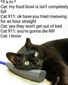 20 Funny Cat Pictures #FunnyCatPhotos