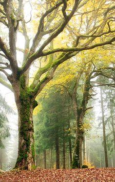 whispering trees