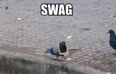 YOLO Pigeon