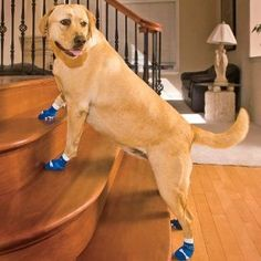 Non-Slip Socks @Susan Caron Bright We need to get these for Lexi so she won't slip down the stairs anymore!!
