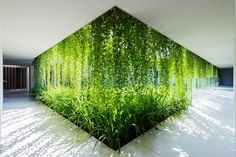 Beautiful! #foliage #greenery #garden #dream #iwish #breathtaking #home naman-spa_220715_09