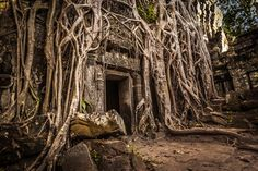 CAMBODIA : The 'Tomb Raider Gate' - ​Ta Prohm Temple - Angkor Wat Complex - Cambodia. PHOTOGRAPHY TOURS : 2012 by Gary Latham, via Behance